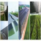 Jardim da fábrica 35g-360g de Shandong e rede agricultural da máscara de Sun do HDPE do Virgin