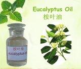 Eukalyptus-wesentliches Öl