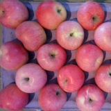 Qinguan Apple의 새로운 작물은 빨리 오고 있다