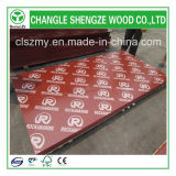 Cliente Requested Small Size 18mm con Logo Film Faced Plywood