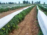rete della prova dell'insetto della rete dell'afide di protezione dell'HDPE 100%Virgin anti dell'anti rete UV dell'insetto