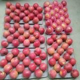 Buona qualità del nuovo raccolto di Qinguan rosso Apple