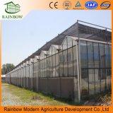 Invernadero de vidrio Multi-Span de marca Venlo de Rainbow para uso comercial