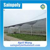 China-Fabrik-Glaswasserkulturplastikfilm-grünes Haus für Tomate