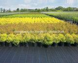 農業の庭の使用の雑草防除