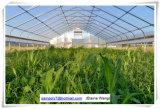Serre van de Film van de landbouw de Plantaardige Gebruikte Commerciële