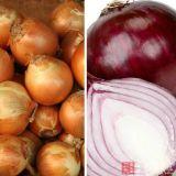 Novo cultivo de cebolas frescas vegetais