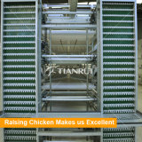 Тип батарея Tianrui вертикальный h наслаивает клетки для куриц Layinig