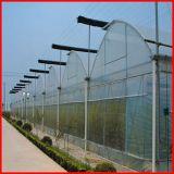 Парник полиэтиленовой пленки Multi-Пяди фермы земледелия для овощей