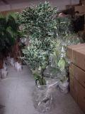 Migliori piante artificiali di vendita dell'albero Gu-301-756-5 del Ficus