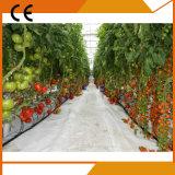 Парник одиночного земледелия пяди Hydroponic для земледелия