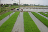 De Niet-geweven Stof van pp voor Landbouw