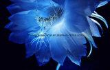 Greensource, pellicola di scambio di calore per i fiori