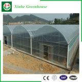 농업 상업적인 단 하나 층 플라스틱 온실