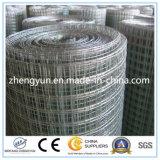 Treillis métallique soudé par vente chaude galvanisé plongé chaud (usine)