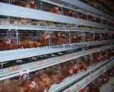 نوع زراعة معدّ آليّ دجاجة قفص من الصين
