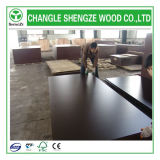 Shengze Wood Best Selling Film Faced Plywood