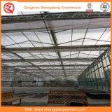 PC Blatt/Glas-/Plastikfilm-galvanisierte Rohr-Gewächshäuser für Erdbeere/Rose