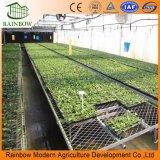 Hydroponic 증가를 위한 플레스틱 필름 토마토 온실