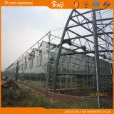 オランダの技術によってインポートされるマルチスパンガラスの温室