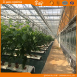 Cucumber Tomatoes를 위한 높은 Production Glass Greenhouse