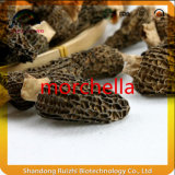 Preço Natural Natural Apropriado Produtos Orgânicos Secos Primários Morchella Cogumelos Boa Qualidade