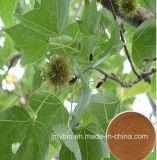 Выдержка плодоовощ Sweetgum высокой очищенности 100% естественная, 4:1 ~20 P.E. плодоовощ Sweetgum: 1