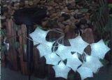 多彩な星祝祭の装飾のための太陽ストリングライト