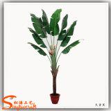 Planta decorativa dos bonsais da banana das plantas artificiais