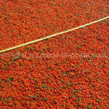 Bagas vermelhas de Ningxia Goji