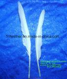 Grosse plume de canard pour faire des manèges en plumes