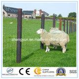 Heiße Verkaufs-kleiner Tierzaun für Schafe, Metallzaun