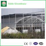 Invernadero multi inteligente de la película del palmo Po/PE de China para plantar
