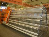 층 보일러를 위한 중국 고품질 닭 가금 장비 감금소