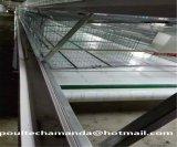 Cage galvanisée à chaud automatique de poulet d'éleveur (un type bâti)