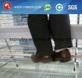 Gabbia di strato del pollo della strumentazione del pollame dell'azienda agricola con il sistema d'alimentazione automatico