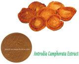 Triterpen des Gesundheits-Produkt Antrodia Salz-Auszug-30% des Polysaccharid-6%