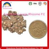 Rizoma organica professionale P.E del sedano di montagna di Szechwan con buona qualità