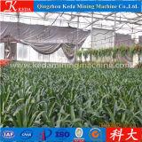 O vegetal de Keda semeia a estufa para a venda
