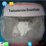 Probar la testosterona anabólica Enanthate del polvo del Bodybuilding de la hormona esteroide de Enan