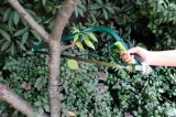 """Замена лезвия узкая прорезная лучковая пила по дереву Hacksaw режущих инструментов 21 сада высокого качества """""""