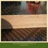 La película barata de la base del álamo del precio hizo frente a la madera contrachapada para Dubia
