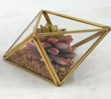 Piante conservate in vaso della decorazione del metallo del Terrarium domestico artificiale del blocco per grafici succulenti