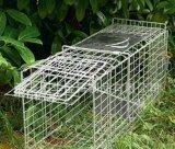 Клетка ловушки крысы ячеистой сети металла
