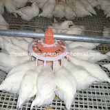 Poultry automático Farming Equipment para Breeder Farm House