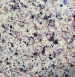 Artificial branco Quartz Stone para Tiles, Slabs, bancadas (YQG-QS1001)