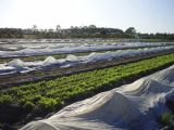 Плавая ткань крышки рядка UV для земледелия