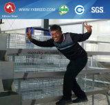 Cage de poulet de machines de ferme avicole pour les couches A3l120