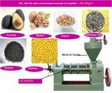 Nocciolo di palma del nuovo prodotto, dell'impianto di estrazione dell'olio della palma