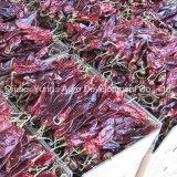 Paprika de Yunnan inteira com haste